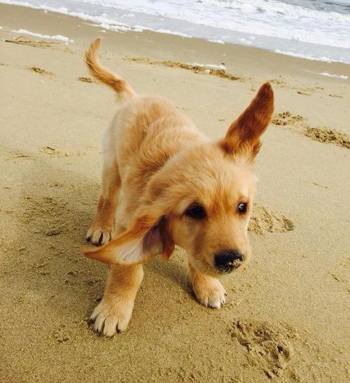 かわい過ぎる子犬の画像の数々!の画像(89枚目)