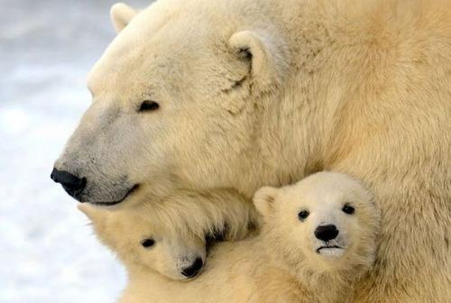 色々な動物の親子の癒される画像の数々!!の画像(14枚目)