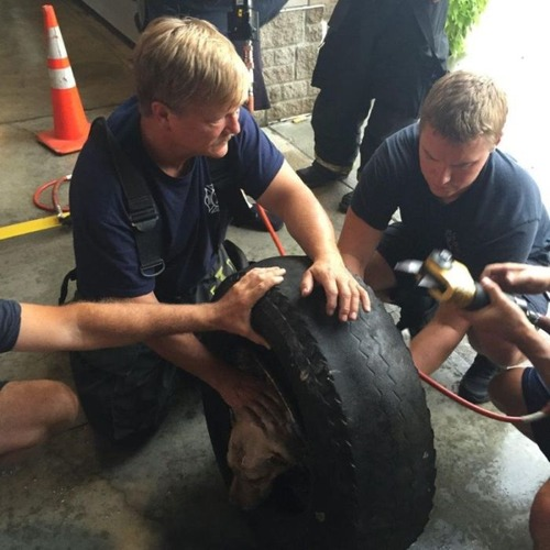 【画像】タイヤのホイールに頭がはまった犬の救助方法がなかなか凄い!!の画像(13枚目)