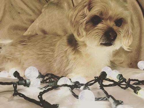 クリスマスのコスプレをした動物達の画像(17枚目)