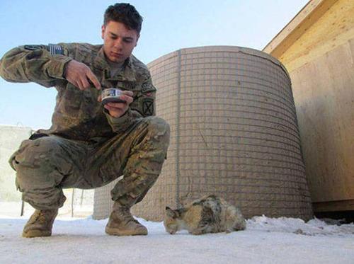 戦場にもネコは居る!!極限状態でも癒される戦場のネコの画像の数々!!の画像(5枚目)