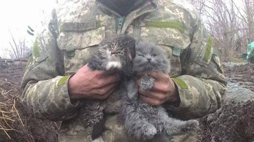 戦場にもネコは居る!!極限状態でも癒される戦場のネコの画像の数々!!の画像(8枚目)