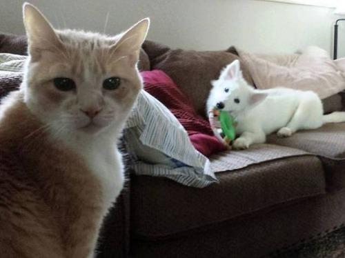 猫と犬の力関係の画像(28枚目)