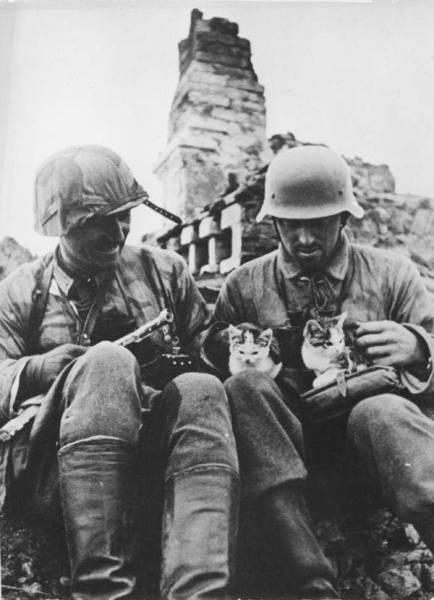 戦場にもネコは居る!!極限状態でも癒される戦場のネコの画像の数々!!の画像(26枚目)