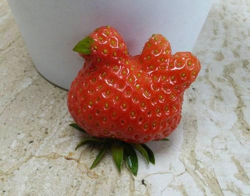 人や動物に見える野菜や果物の画像(12枚目)
