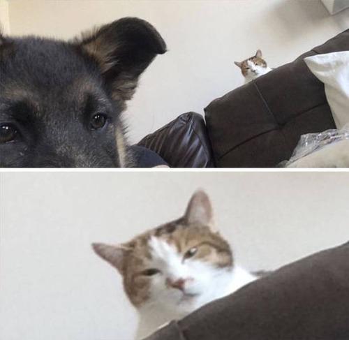 猫と犬の力関係の画像(4枚目)