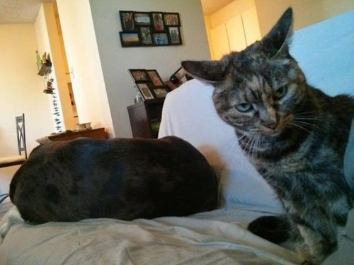 猫と犬の力関係の画像(13枚目)