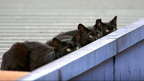 獲物を狙うかわいいネコの画像(1枚目)