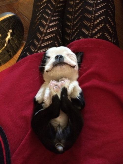 かわい過ぎる子犬の画像の数々!の画像(84枚目)