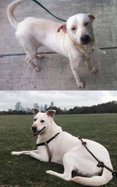 捨犬の時と良い飼主が見つかった時のワンちゃんのほのぼの比較画像の数々!!の画像(31枚目)