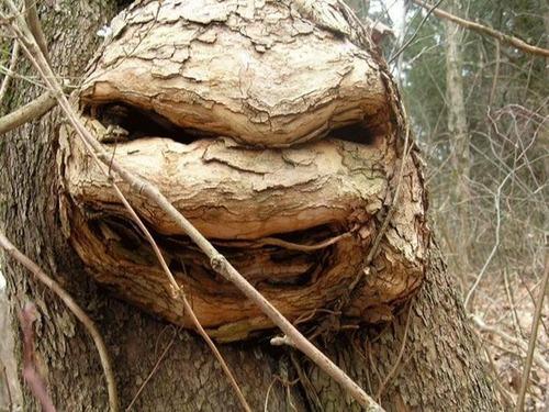 不気味な形の樹木の画像(25枚目)