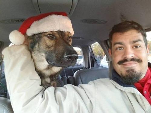 クリスマスのコスプレをした動物達の画像(19枚目)