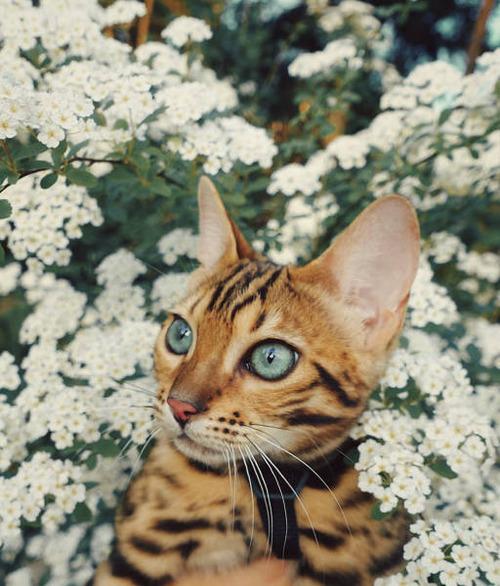 美しい風景と猫の画像(26枚目)