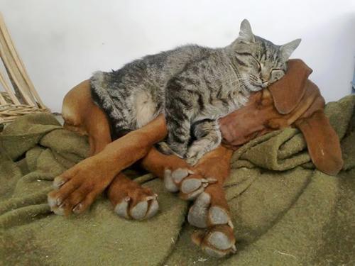 ほのぼのする!仲の良い犬と猫の画像の数々!!の画像(20枚目)
