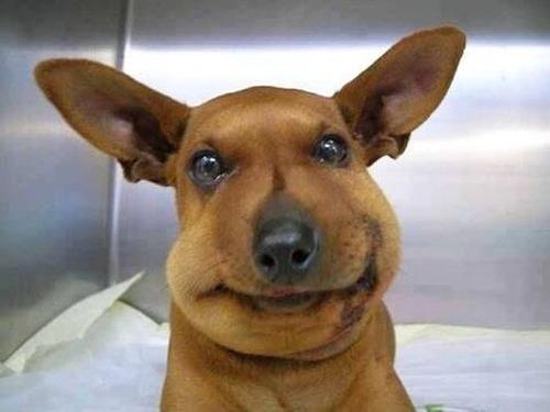 ハチを食べた犬の画像(2枚目)
