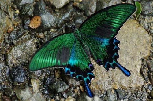 怪しすぎる見た目の昆虫の画像(12枚目)