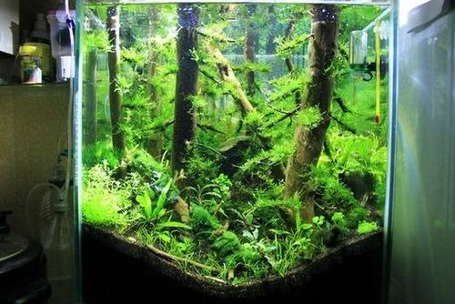 落ちている木で作った水中の森のようなアクアリウムが凄い!!の画像(6枚目)