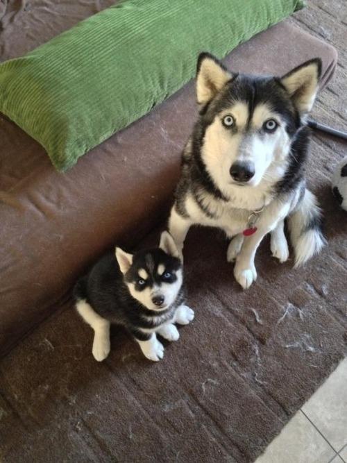 かわい過ぎる子犬の画像の数々!の画像(75枚目)