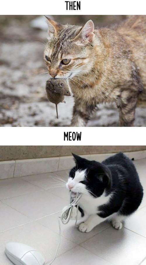 テクノロジーの進化がネコ達に与えた影響の比較画像の数々!!の画像(8枚目)