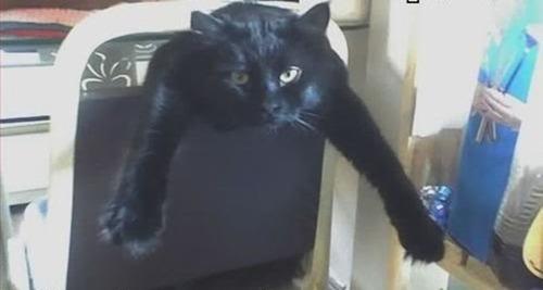 なぜ猫は狭いところが好きなのか??挟まっている猫の画像の数々wwwの画像(11枚目)