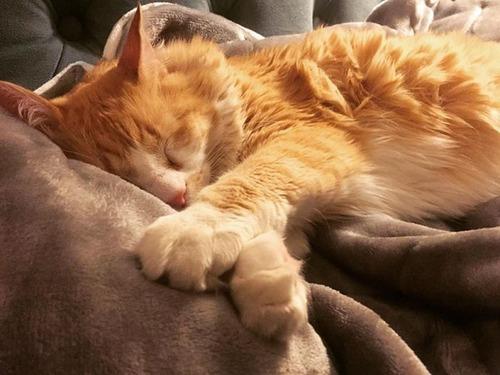 可愛く眠っている動物達の画像(23枚目)