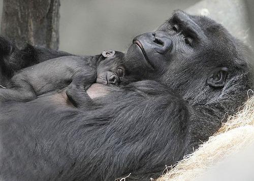 色々な動物の親子の癒される画像の数々!!の画像(5枚目)