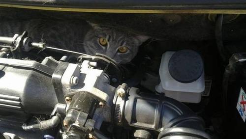 自動車の中に潜んでいる動物達の画像(19枚目)