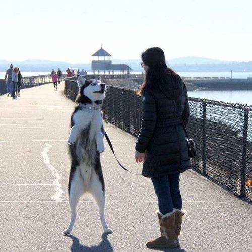 二足歩行しているかわいい動物の画像(11枚目)