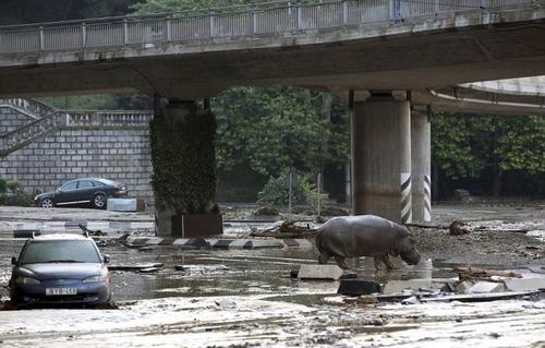 洪水で動物達が大脱走した時の写真の数々wwの画像(14枚目)