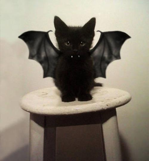 kittens_01
