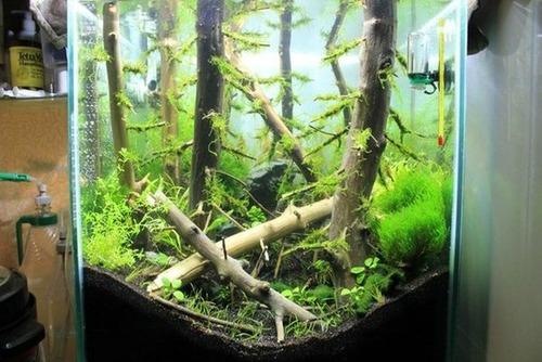 落ちている木で作った水中の森のようなアクアリウムが凄い!!の画像(5枚目)