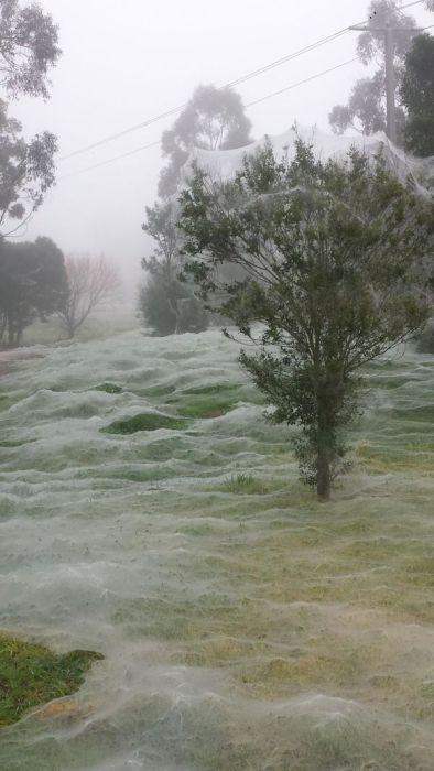蜘蛛の巣が一面を覆う草原の画像(7枚目)