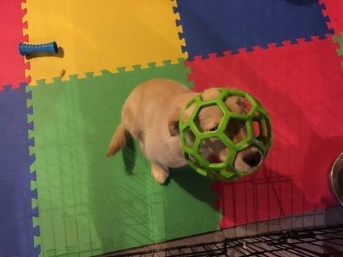 かわい過ぎる子犬の画像の数々!の画像(7枚目)