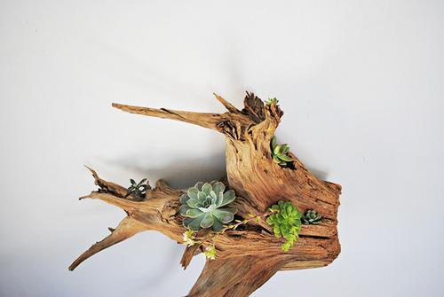 【画像】狭くても大丈夫!小さな植木が綺麗に飾れる工夫の数々!の画像(6枚目)