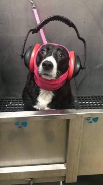 怯えてる犬の画像(32枚目)