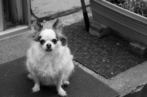 【画像】自分のペットのベストショット写真の数々!!の画像(46枚目)