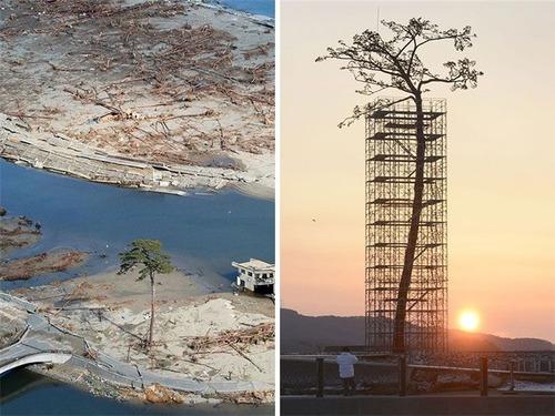 生えている樹木の画像(29枚目)