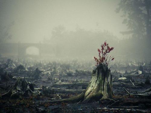 生えている樹木の画像(9枚目)