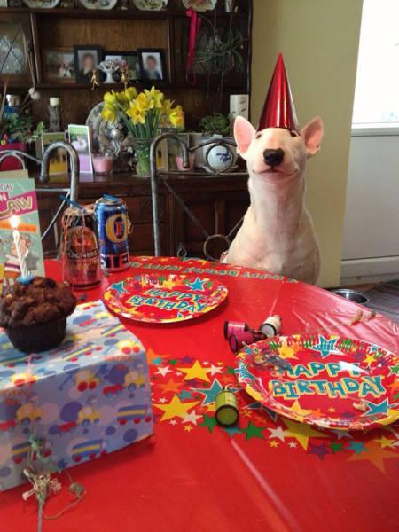 動物達の誕生日の写真の数々!!の画像(21枚目)