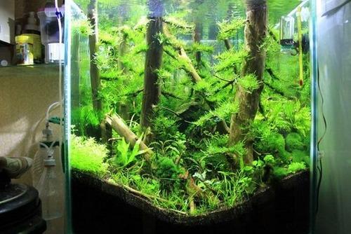 落ちている木で作った水中の森のようなアクアリウムが凄い!!の画像(7枚目)