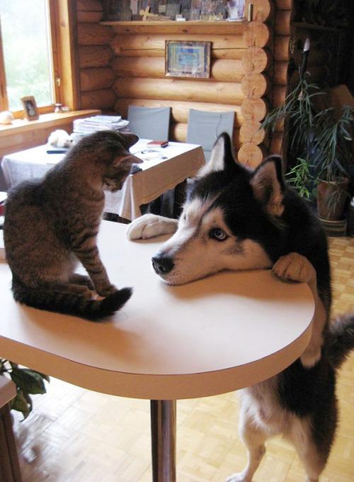 ほのぼのする!仲の良い犬と猫の画像の数々!!の画像(25枚目)