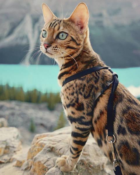 美しい風景と猫の画像(7枚目)