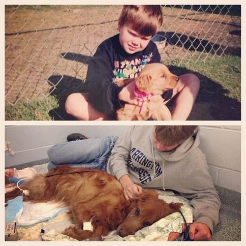 犬や猫の最初に撮った写真と最後に撮った写真の数々の画像(1枚目)