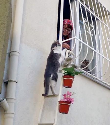 猫ちゃん用の階段の画像(1枚目)