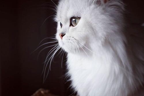 かわい過ぎる猫ちゃんの画像(25枚目)