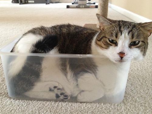 器に入った猫の画像(3枚目)