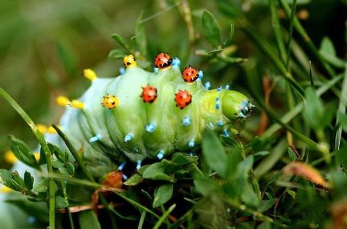 怪しすぎる見た目の昆虫の画像(5枚目)