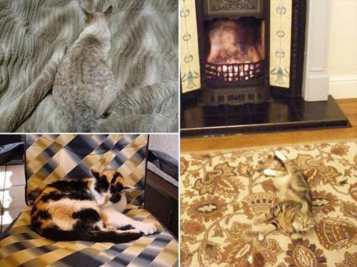 隠れているつもりの猫の画像(20枚目)