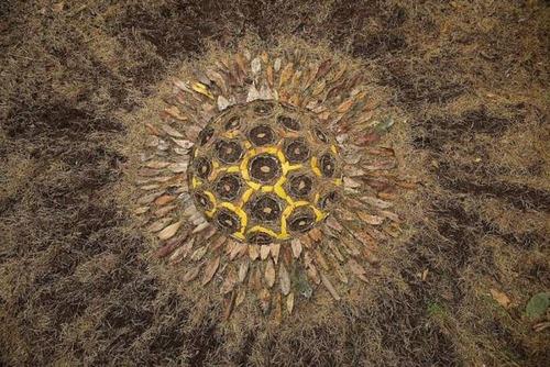 自然の素材を使ったアートの画像(7枚目)