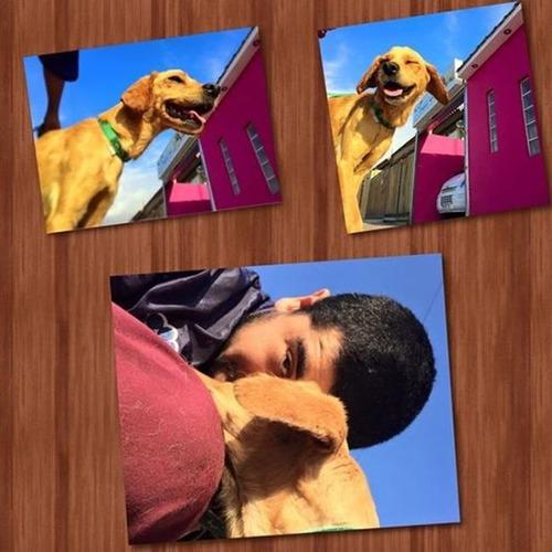 【画像】タールだらけのオイルまみれの瀕死の犬の救出から復活までの様子の画像(9枚目)